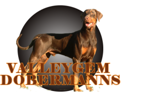 ValleyGem Dobermans